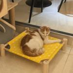 """ネコのいる動物に優しいカフェ""""메이티엔 건대점(MAYTEA&)""""*建大入口"""